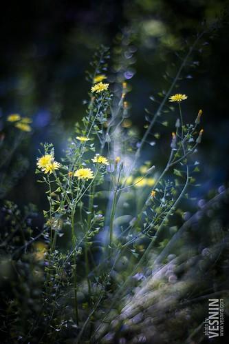 Весенние цветочки