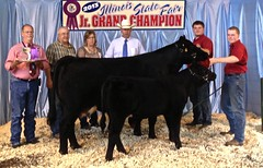 "Grand Champion Performance Aged Cow IL State Fair '13 • <a style=""font-size:0.8em;"" href=""http://www.flickr.com/photos/25423792@N05/14252023897/"" target=""_blank"">View on Flickr</a>"