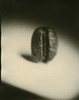 Coffee bean (Giovanni Savino Photography) Tags: macro coffee spot processing caffeine coffeebean macrophotography largeformatphotography coffeeprocessing strobist caffenolc developedincoffee softfocuslens magneticart directpositivepaper ©giovannisavino