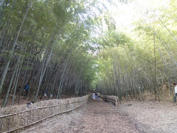 大高緑地公園(名古屋市緑区)~無料でたけのこ堀り~の写真