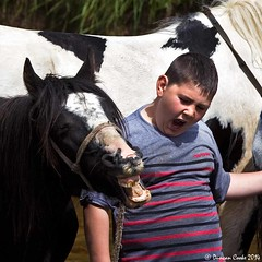 DS0D0780-Appleby-Horse-Fair (duncancooke.happydayz) Tags: horse river yawn fair cumbria eden appleby yawning