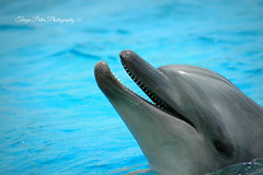 Just Say Hello ! (Terezaki ) Tags: life happy zoo mediterranean searchthebest dolphin hellas greece pictureperfect blye naturesfinest anawesomeshot flickrdiamond theperfectphotographer natureselegantshots