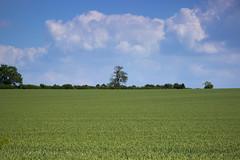 Beautiful (_alexjd) Tags: blue trees cloud sun white tree green alex nature grass clouds canon walking photography eos rebel bush kiss d walk farm farming sunny 600 trespass bushes 75300 cloudporn alexjames 75mm 300m alexj 600d 75mm300mm t31 alexjd canoneos600d rebelt3i