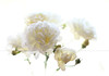 White thought. +1 (Maria Dattola) Tags: flowers copyright nature fleurs canon eos bokeh © rosa natura fiori 2014 50mmlens purezza 60d whitethought pensierobianco