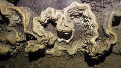 Curvy Rimstone Dam (wrcochran) Tags: tag alabama caves limestone caving cavern speleo spelunking nss caveformations