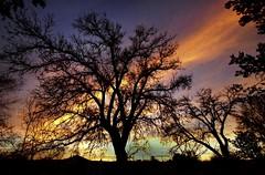tree of light ... (Ph0tomas) Tags: sunset sky newmexico beautiful silhouette clouds sunrise landscape lumix mm nm f4 714 landofenchantment