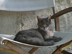 "Marcella and her chair • <a style=""font-size:0.8em;"" href=""http://www.flickr.com/photos/91306238@N04/14575673515/"" target=""_blank"">View on Flickr</a>"