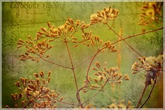 Herb (ulli_p) Tags: light plants green art texture nature colors thailand gold asia southeastasia colours botany herb textured isan aworkofart flickraward texturedphoto ruralthailand awardtree artofimages exoticimage canoneoskissx5