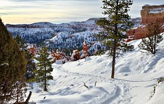 A Path in the Snow (Bryce Canyon National Park) (thor_mark ) Tags: trees sun nature utah unitedstates trail evergreens bryce portfolio brycecanyon day5 hoodoos snowylandscape