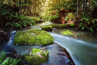 Sheoak Creek 2