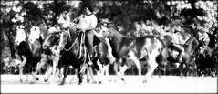 Sueo overo (Eduardo Amorim) Tags: horses horse argentina criollo caballo cheval caballos cavalos pferde herd cavalli cavallo cavalo gauchos pferd pampa hest hevonen chevaux gaucho  hst gacho  campero provinciadebuenosaires  gachos  sanantoniodeareco  areco gregge crioulo troupeau caballoscriollos herde criollos  tropillas pampaargentina camperos tropilhas tropilla  crioulos cavalocrioulo tropilha caballocriollo campeiros campeiro eduardoamorim cavaloscrioulos pampaargentino