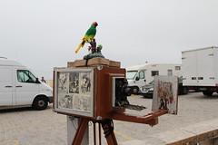 Parrot's Old Camera (Daniela Pedro) Tags: camera old antique da figueira foz