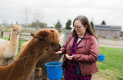 medina-7750 (FarFlungTravels) Tags: alpaca animal farm medinacounty onefineday shear wool