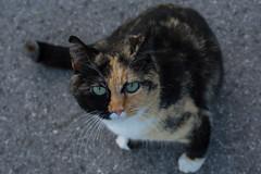 Meew (Zuncra*) Tags: mew cat nikond5200 nikon d5200 gato gata