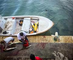 Sunday workers (annalodig) Tags: blood caribbean ocean sea boat fish fisherman
