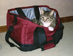 Picnic with a Cat (Stabbur's Master) Tags: cats kitty kitten kitties