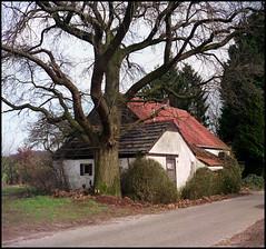 Ikoflex 1b Fujifilm Pro 160NS (07) (Hans Kerensky) Tags: zeiss ikon ikoflex 1b german tlr fujifilm pro 160ns plustek opticfilm 120 groesbeek kamp straat small farm big tree