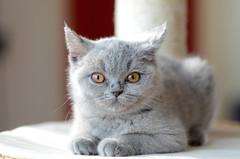 baby cat (Wolfgang Binder) Tags: baby cat babycat animal nikon d7000 zeiss planar planart2100