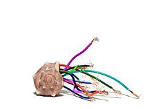 vingt mille lieues sous les mers (brescia, italy) (bloodybee) Tags: seashell shell murex bolinusbrandaris sea ocean 365project vingtmillelieuessouslesmers twentythousandleaguesunderthesea julesverne scifi science sciencefiction literature film movie cinema electricity wire power energy stilllife humor fun white