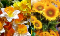 Spring Diptych (abstractartangel77) Tags: daffodils sunflowers diptych spring