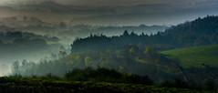 Shillito Wood (Peter Quinn1) Tags: layers mist morning dawn peakdistrict shillitowood derbyshire owlerbar landscape