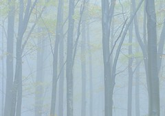 Italy, foggy forest (Vittorio Ricci (thanks +++ 2.7 millions views)) Tags: liguria montagna nebbia fog wood forest appennino