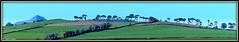 """ Climbing the Ridge "" ("" P@tH Im@ges "") Tags: scots pines ridgeway ww2 raf pilots ireland farmer cornfield"