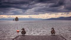 FRIENDS FOR LIFE (Jeton Bajrami) Tags: birds bird friends lake leman landscape perfect art 2017 cloud clouds cloudy lightroom sony alpha a77ii a77mkii viilleneuve riviera montreux