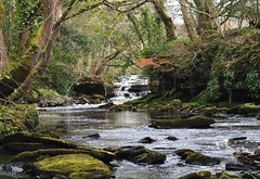 The Roogagh falls (carolinejohnston2) Tags: rocky moss banks waterfall falls trees countryside fermanagh garrison ireland river