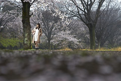 SAKURA (ai3310X) Tags: none carlzeiss ycontax sonnar t2885 ポートレート 桜 portraits