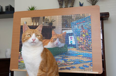 Puzzled Herbie (cuppyuppycake) Tags: puzzle ginger cat pet indoors