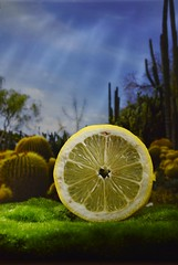 Lemon abstract _DSC0110 (ikerekes81) Tags: lemon background backdrop lightbox nikond3200 nikon d3200 abstract 18105mm closeup macro sb700 landscape beautiful macromonday