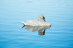 Minimalism (brendon_curtis) Tags: canon 5dmkiii eos usm 400mm f56l f56 l lens water sky lake pond river tree trees bird nature natural