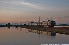 ALe724 in risaia (MattiaDeambrogio) Tags: treno treni train trains ale724 vespolate regionale risaia