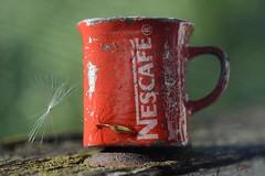 Fresh Glaze o) Happy Macro Monday (ksenijaJ) Tags: glaze macromonday macro macrorings niftyfifty manualfocus red cup dendoline greenbackground