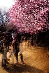 Tokyo50-8 (Diacritical) Tags: japan park shinjuku tokyo march282017 leicacameraag leicamtyp240 summiluxm11435asph f80 ¹⁄₁₈₀sec centerweightedaverage street