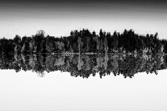 (B&W) Autumn Reflection (JourneyIntoEye) Tags: monochrome blackandwhite bw upsidedown inversed lake water waterreflection