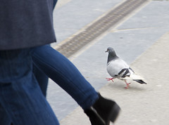 ...you never walk alone (srchedlund) Tags: amsterdam srchedlund duva dove walking youneverwalkalone philosophical contemplation shoe filosofiskbetraktelse
