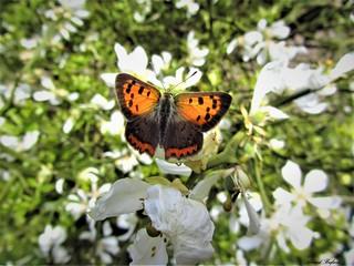 Butterfly 1211