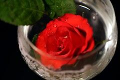 A Glass of Red Rose (G. Lang) Tags: weinglas lesgouttesdeau waterdrops rose sonyilce7m2 tamronaf90mm128macro11 sonyalpha7ii makro macro wineglass wassertropfen sonya7ii redrose verreàvin