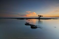 Solitaire (Welski Photography) Tags: landscape sunset lucena quezonprovince mangrove tree seascape