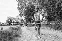 V_A_6509 (Valentino Capasso - Fotografia Sportiva) Tags: valentino capasso andocorriblogspotit andòcorri andocorri antonio maratona tapasciata italiy fitness corsa podismo sport healty workout marcia ciliegi running