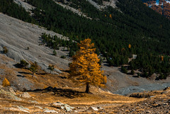 Game of tones (Luca Cambriglia) Tags: france italy europe tree nature yellow green mountain rock lonely tones colors sun explore hiking climbing alpine alps nikon nikkor d60 light photography photo contrast live adventure friend view beauty art