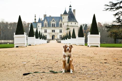 Laika at Château de Chenonceau | Loire Valley, France