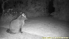 TrailCam226 (ohange2008) Tags: foxes cat essexgarden dogfood peanuts