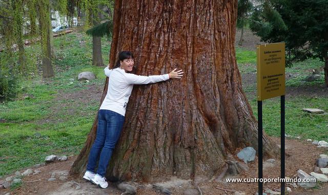 Elena abrazada a la sequoia gigante del jardin de Boyana