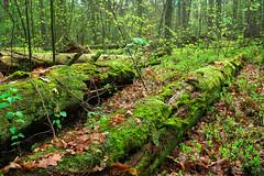 Kampinoski Park Narodowy / (PolandMFA) Tags: nature poland polska nationalparks attractions parknarodowy atrakcje kampinoskiparknarodowy parkinarodowe turystyczne kampinosnationalpark
