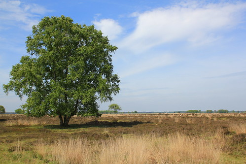 Beautiful Drenthe, Dwingelderveld