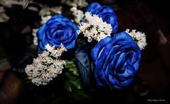Rosas de pitufos (Edwin.1997) Tags: blue roses de y para negro una alemania todo tu rosas ramo fondo regalo castillo carta edwin nada malo amazonas azules amada salazar verdecora mesnada acompaalo