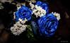 Rosas de pitufos (Edwin.1997) Tags: blue roses de y para negro una alemania todo tu rosas ramo fondo regalo castillo carta edwin nada malo amazonas azules amada salazar verdecora mesnada acompañalo